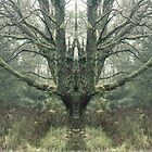 mirror_tree by Rachel Taylor