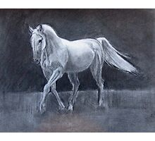 Horse Charcoal Drawing Photographic Print