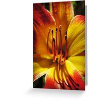Daylily Macro Vector 001 Greeting Card