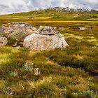 Alpine Bog. by Bette Devine