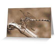 Dragon Fly - Sepia Greeting Card