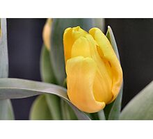 Butter Yellow Photographic Print