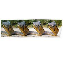 Tiger Meyhem Tasmanian Tiger snakes Poster
