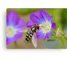 Hoverfly 2 Canvas Print