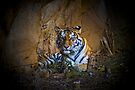 Tiger At Rest Too - Riverbanks Zoo, 2010 by Randall Faulkner