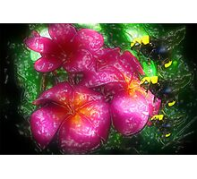 Three Bees of Flowers, Please Photographic Print