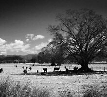 Outback NSW by Melissa Belanic