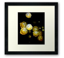 Jelly Soup Framed Print