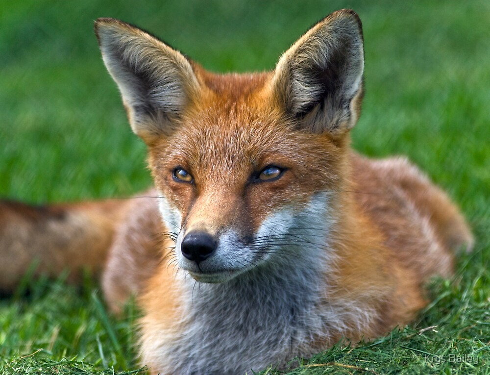 Foxy by Krys Bailey