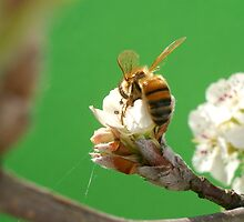 Bee & Blossom by Shara