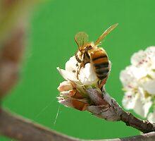 Bee & Blossom by Shara