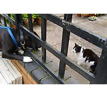 The neighbourhood fence battle continues - Chrissie will win in the end, Dat's Rule and Diesel Drools! Photographic Print