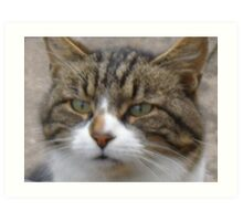Tiggy Winks - the most gorgeous fluffy tabby I have ever seen, just look into her gorgeous green eyes! Art Print