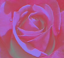 Hot Rose Tint by JuliaWright