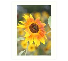 A Different kind of Sunflower Art Print