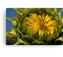 Ready To Open Canvas Print