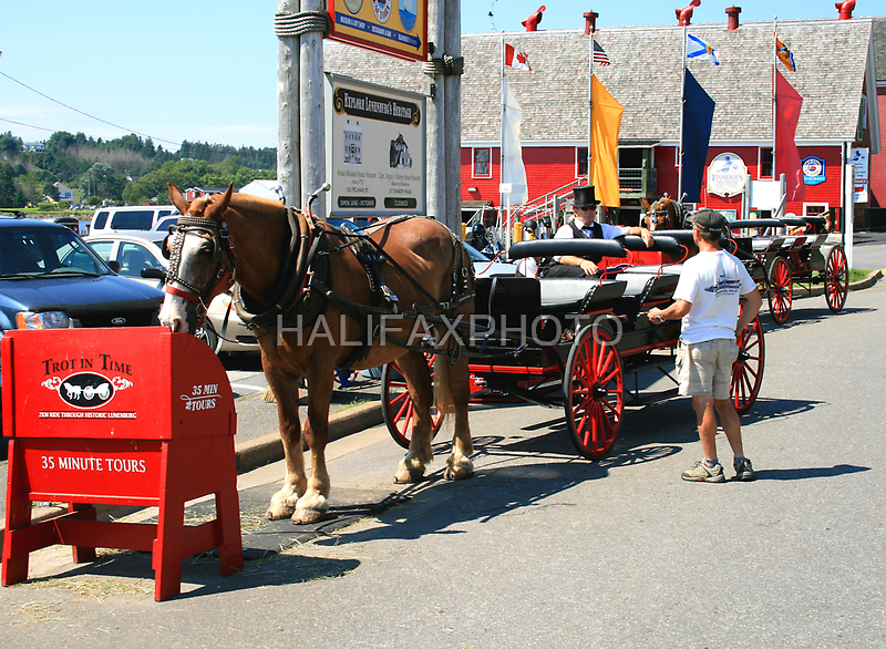 Horse & Buggy Tour by HALIFAXPHOTO