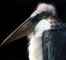 Marabou Stork by ljm000