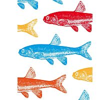 Colourful Fish Photographic Print