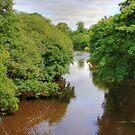 River Almond II by Tom Gomez