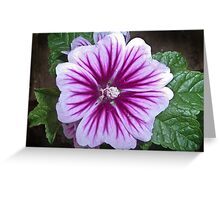 Floral Focus Greeting Card