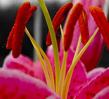 The Stamen by drjones