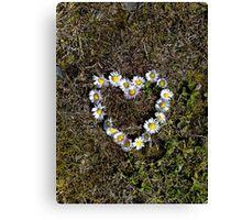 Saying it with Daisies Canvas Print
