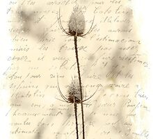 Words and Weeds - Teasels and Snow by MotherNature2