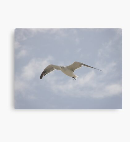 Hang Time - Jekyll #5 Canvas Print
