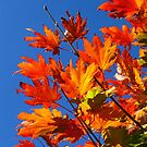 Blue Skies of an Autumn Day by Marilyn Harris