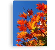Blue Skies of an Autumn Day Canvas Print