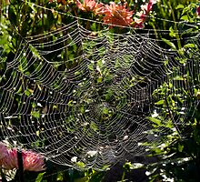 The web we weave or a room with a view by Al Mullen