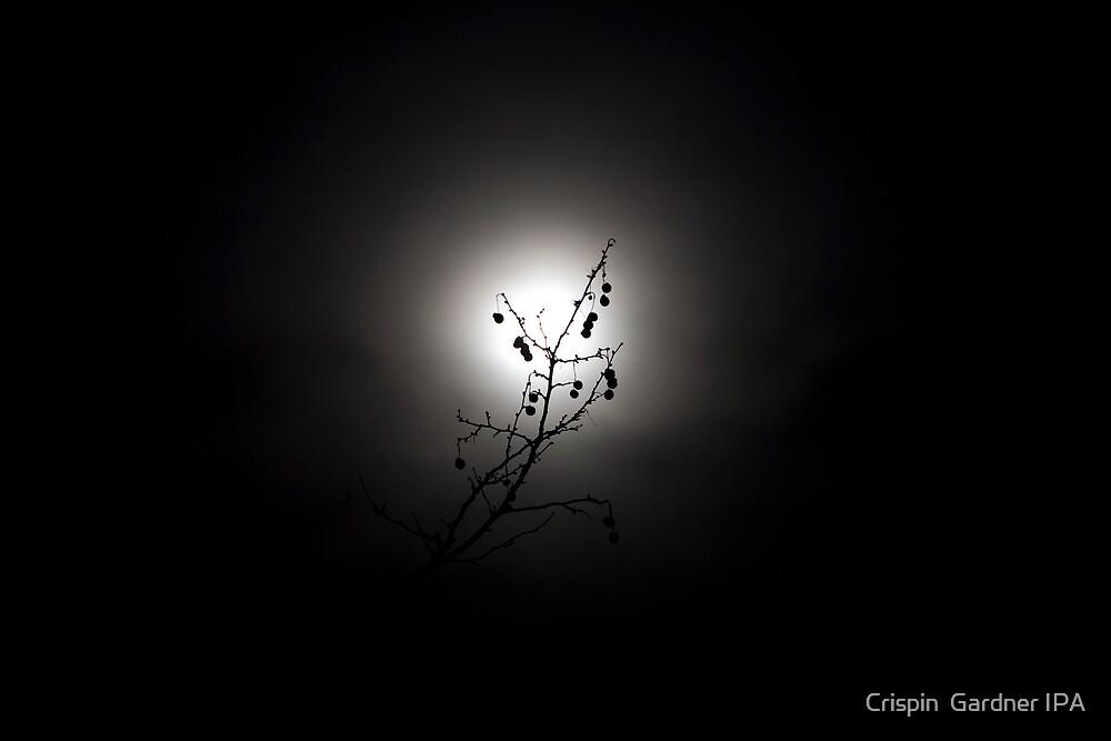 Moonlighting by Crispin  Gardner IPA