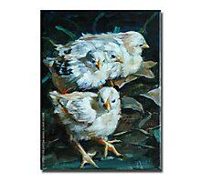 Moa Chicks 2 Photographic Print
