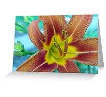Day Lily for a Monday Greeting Card