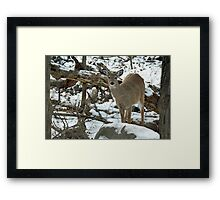 Whitetail Deer Doe in Snow Framed Print