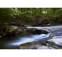 Wooded Bliss Photographic Print