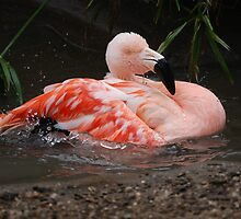 Splish Splash....Takin a Bath by Carol Barona