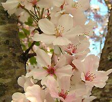 String of Blossoms by Glenn Grossman