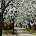 Downton Park by Glenn Grossman