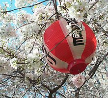 Lantern in Yoshino Tree by Glenn Grossman