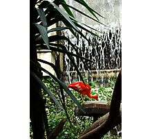 Ibis eating in front of waterfall Photographic Print