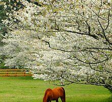 Beautiful Meadow by Glenn Grossman