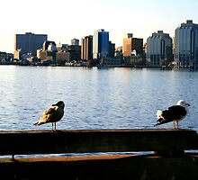 Halifax, Nova Scotia by HALIFAXPHOTO