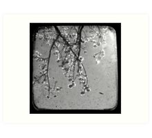 Blossoms in Black & White - Through The Viewfinder Art Print