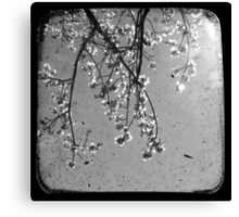 Blossoms in Black & White - Through The Viewfinder Canvas Print