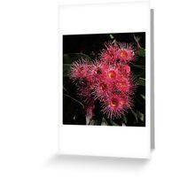 Native Gum Flowers Greeting Card