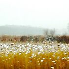 Winter Prairie by Alma Lee by Alma Lee