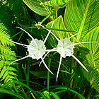 Spider Lilies - Prettier than the Name Suggests by Martha Sherman