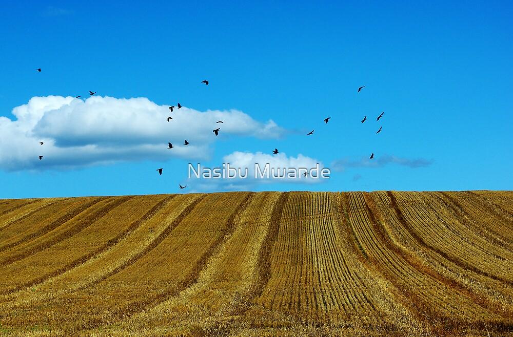 Hay field Flyers by Nasibu Mwande